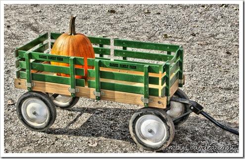 Ledyard Pumpkin Contest