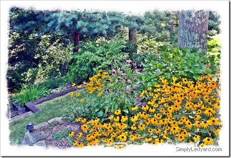 Ledyard Garden