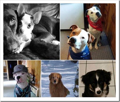 Ledyard Dogs