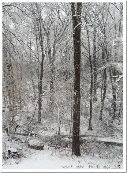Surprise snowstorm 2016
