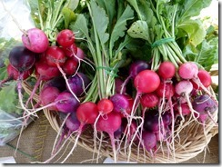 Ledyard Radishes